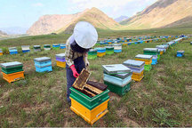 اشتغال 1800 نفر در صنعت زنبورداری قزوین