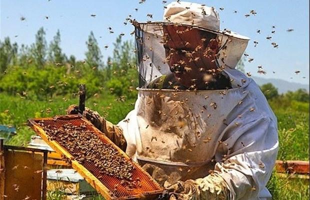 تولید عسل در تربت جام 10 درصد افزایش یافت