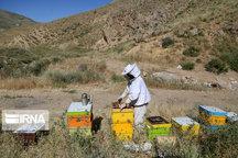آمارگیری کلنیهای زنبور عسل در کردستان آغاز شد