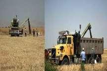 200 هکتار از اراضی شهرستان کمیجان زیر کشت کلزا قرار گرفت