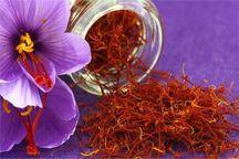 ۲.۶ تن زعفران در تایباد خریداری شد