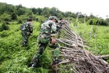 رفع تصرف از اراضی ملی و کشف چوب آلات قاچاق در آستارا