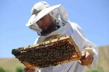 زنبورداران سالانه 12 هزار تُن عسل در خوی تولید می کنند