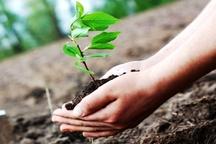 پویش «یک من، یک درخت» در همدان اجرا می شود