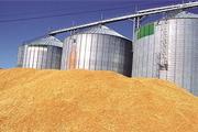 130 هزار تن گندم از کشاورزان فارس خریداری شده است