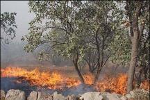 آتشسوزی گسترده در پارکملی خَبْر بافت تلاشنیروهای امدادی برای مهار  آتش