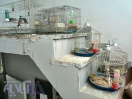 کشف و ضبط تعداد ۱۸ قطعه پرنده وحشی زنده گیری شده در ازنا