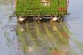 کشاورزان ایلامی از کشت برنج خودداری کنند