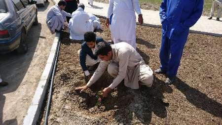کاشت بیش از 15هزار اصله نهال در ایرانشهر