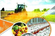 تولید محصولات زراعی در آذربایجان شرقی 2 برابر شد