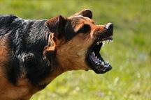 حمله یک قلاده سگ کودک ساوجی را مجروح کرد