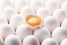 محدودیتی برای تامین تخم مرغ مورد نیاز هرمزگان نداریم