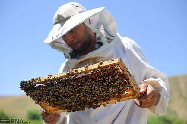 ۶۶ تن عسل در شهرستان شوشتر برداشت شد