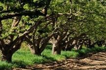 احیای باغ سیب ثمره ۴ سال تلاش مدیریت شهری بوده است