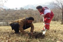 طرح ملی جنگلانه در عرصه های طبیعی شهرستان سروآباد اجرا شد