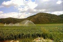 ایلام 55 هزار بهره بردار بخش کشاورزی دارد