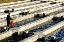 2هزار تن ماهی در بروجرد تولید شده است