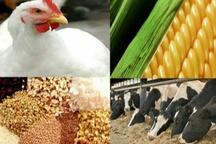 عرضه نهاده به دامدارانی که محصولات خود را با قیمت دولتی عرضه کنند  در البرز کمبود شکر نداریم