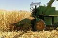 پیش بینی برداشت 2 هزارو 800 تن ذرت دانهای از مزارع کشاورزی پلدختر