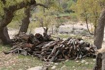 قاتل درختان جنگلی بلوط در خرم آباد دستگیر شد