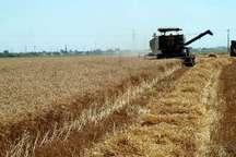 ظرفیت نظام مهندسی کشاورزی برای کاهش افت محصول مورد استفاده قرار بگیرد  ورود676دستگاه تراکتور به ناوگان کشاورزی کردستان