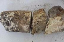محوطه سنگواره های ماموت در بیله سوار مغان به ثبت ملی رسید