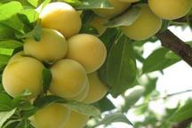 7883 تن محصول کشاورزی گلستان صادر شد