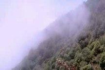 آتش سوزی در جنگل ها غرب گرگان مهار شد