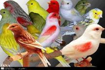 150 قطعه پرنده زینتی قاچاق در خرمشهر کشف شد