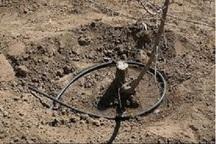 کاهش بارندگی تهدیدی برای حیات باغات چهارمحال و بختیاری