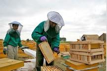 عسل سبلان و موانع جهانی شدن آن