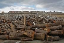 80 میلیارد ریال محموله چوب قاچاق در ممسنی کشف شد