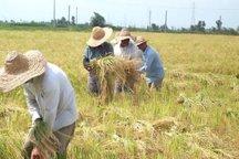 روش های سنتی تولید محصولات کشاورزی پاسخگوی نیاز کشاورزان نیست