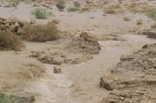 رگبار باران مردم 6 شهر سیستان و بلوچستان را شادمان کرد
