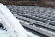 13 مزرعه پرورش ماهی در بروجرد درحال ساخت است