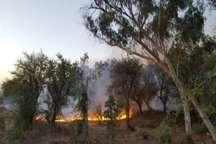 آتش سوزی در جنگل های دزفول