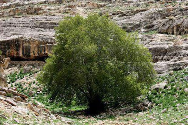 چهار اثر تاریخی استان مرکزی در فهرست میراث ملی طبیعی ثبت شد