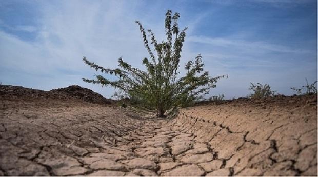 آب اراضی نهالکاری شده خوزستان تامین است