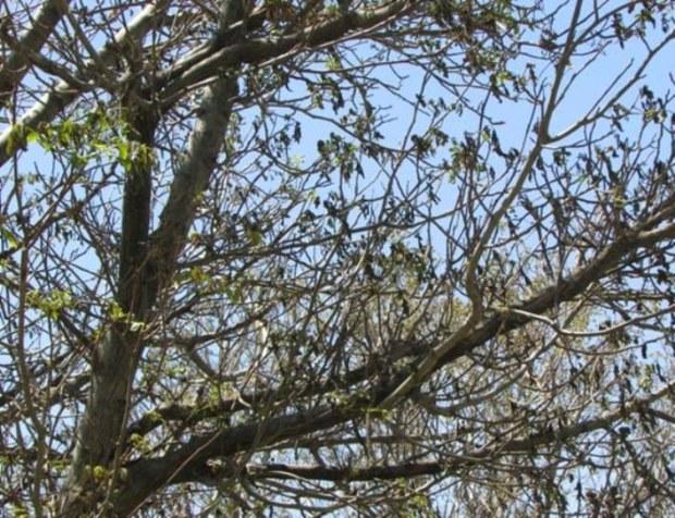 سرما و تگرگ به باغهای کهگیلویه وبویراحمد خسارت زد