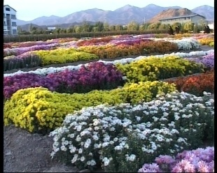 نمایشگاه گل و گیاه، مبلمان، خدمات شهری و حمل و نقل عمومی در رشت افتتاح شد