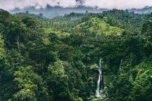 جنگل های شمال سالانه 3 میلیارد متر مکعب  آب ذخیره می کنند