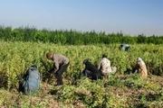 ۲۱۶ میلیارد تومان تسهیلات روستایی در لرستان نهایی شد