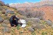 برداشت گونه های گیاهی در مراتع بروجرد ممنوع است