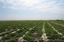 فاز دوم طرح ۵۵۰ هزار هکتاری کشاورزی خوزستان عملیاتی می شود