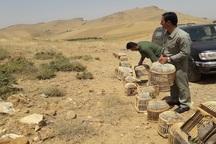 50 بال کبک توسط 20 شکارچی نادم در بوکان رها شد