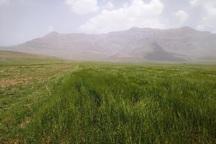 کشاورزان باید با خطرات زیست محیطی ناشی از کم آبی آشنا شوند