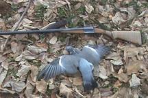 سه شکارچی غیرمجاز در لرستان دستگیر شدند