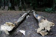 درختان قطع شده نازیآباد تهران جایگزین میشوند