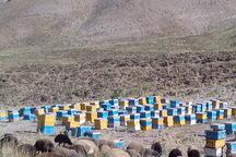 22 هزار کلنی زنبور عسل در مراتع لار شمیرانات مستقر می شود