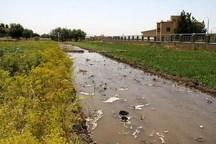 آبیاری مزرعه با فاضلاب تاوان سنگین داشت